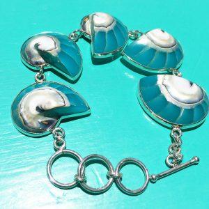 Turquoise Nautilus Bracelet