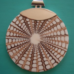 Seashell Spider Shell Pendant